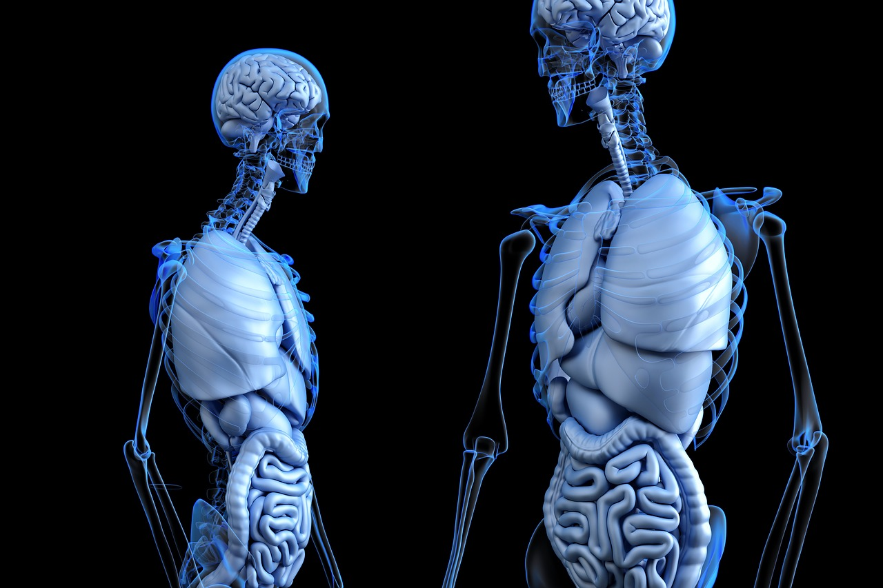 futuro del trasplante de órganos: ¿Serán en base a la impresión en 3D? 1