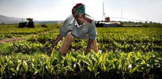 El acaparamiento de tierras en África alimenta conflictos 5