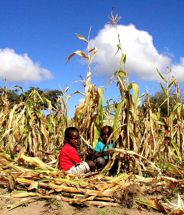 El acaparamiento de tierras en África alimenta conflictos 3