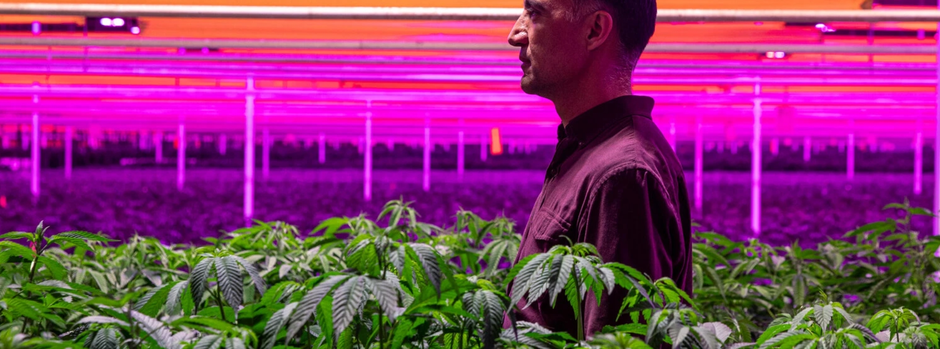 empresas de marihuana medicinal: 1 guía indispensable 3